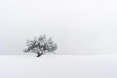 Árbol solo en invierno Imágenes de archivo libres de regalías