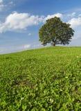 Árbol solo en la colina Fotos de archivo libres de regalías