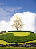 Árbol solo en la colina Imagenes de archivo