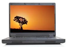 Árbol solo en la computadora portátil Fotografía de archivo