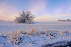 Árbol solo en la mañana del invierno fotografía de archivo