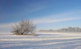 Árbol solo en la mañana del invierno imágenes de archivo libres de regalías