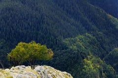 Árbol solo en la montaña Fotografía de archivo libre de regalías