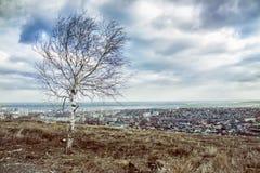 Árbol solo en la montaña que pasa por alto la ciudad Fotos de archivo
