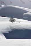 Árbol solo en la nieve Imagen de archivo libre de regalías