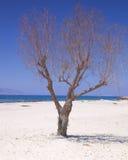 Árbol solo en la playa Fotografía de archivo