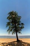 Árbol solo en la playa Fotos de archivo libres de regalías