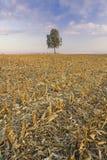 Árbol solo en la puesta del sol Imagenes de archivo