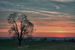 Árbol solo en la puesta del sol Foto de archivo