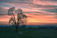 Árbol solo en la puesta del sol Imagen de archivo libre de regalías