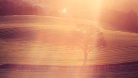 Árbol solo en los campos de cultivo de la primavera en luz de la salida del sol almacen de video