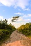Árbol solo en manera media de la naturaleza Foto de archivo libre de regalías