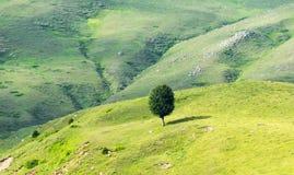 Árbol solo en montaña Imagenes de archivo