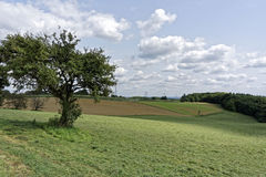 Árbol solo en naturaleza Imagen de archivo