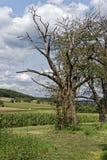 Árbol solo en naturaleza Foto de archivo libre de regalías