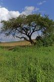 Árbol solo en naturaleza Imagen de archivo libre de regalías