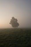 Árbol solo en niebla Imagen de archivo libre de regalías
