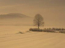 Árbol solo en niebla de la nieve