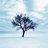 Árbol solo en nieve Imagen de archivo libre de regalías
