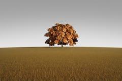 Árbol solo en otoño Fotografía de archivo libre de regalías