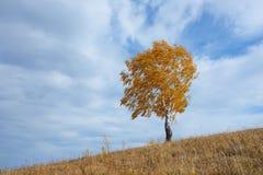 Árbol solo en otoño fotos de archivo