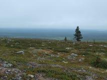 Árbol solo en panorama del paisaje de Laponia Imágenes de archivo libres de regalías