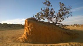 Árbol solo en parque nacional del desierto de los pináculos Imagenes de archivo