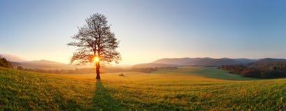 Árbol solo en prado en la puesta del sol con el sol y la niebla - panorama Imagenes de archivo