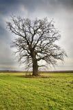 Árbol solo en prado verde Fotografía de archivo libre de regalías