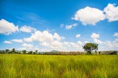 Árbol solo en prado verde extenso Fotografía de archivo libre de regalías