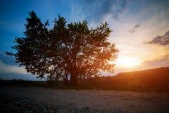 Árbol solo en puesta del sol Foto de archivo
