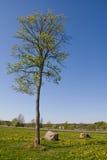 Árbol solo en resorte Foto de archivo libre de regalías