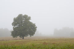 Árbol solo en un campo de niebla Imagenes de archivo