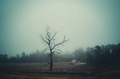 Árbol solo en un campo en la isla de Finlad Aland Foto de archivo