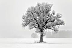 Árbol solo en un campo Paisaje de Lituania Fotos de archivo