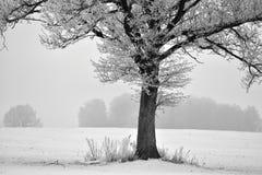 Árbol solo en un campo Paisaje de Lituania Imagenes de archivo