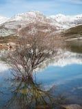 Árbol solo en un lago debajo de las montañas Fotos de archivo