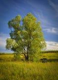 Árbol solo en un prado Foto de archivo