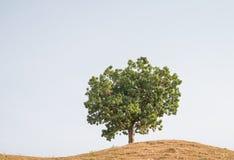 Árbol solo en una colina Fotografía de archivo
