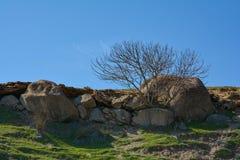 Árbol solo en una cuesta, rocas y fragmentos de montaña de piedras Foto de archivo