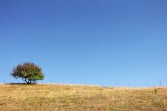 Árbol solo en una montaña Imágenes de archivo libres de regalías