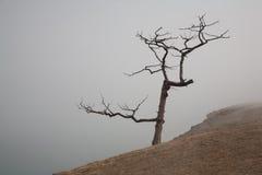 Árbol solo en una niebla en la costa Foto de archivo
