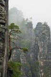 Árbol solo en una roca Imagenes de archivo