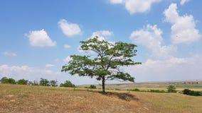 Árbol solo hermoso Fotografía de archivo