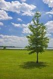 Árbol solo, lago Palic, Serbia Imagenes de archivo