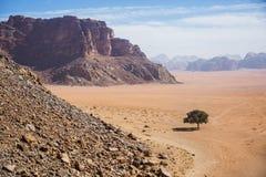Árbol solo Paisaje de Jordania Desierto de Wadi Ram foto de archivo