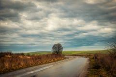 Árbol solo por la carretera nacional Fotografía de archivo
