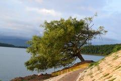 Árbol solo que se inclina de lado fotografía de archivo