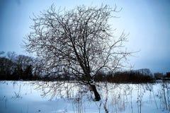 Árbol solo rústico del campo del invierno Fotos de archivo libres de regalías