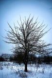 Árbol solo rústico del campo del invierno Fotografía de archivo